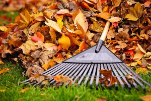 iStock 157996456 300x200 Freshen Up Your Landscape This Fall