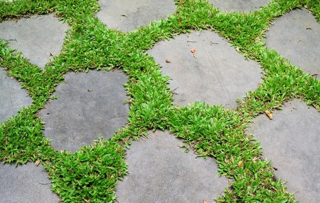 Vibrant green grasses glowing between garden stepping stones
